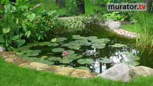 Oczko wodne w ogrodzie: jak zbudować oczko wodne