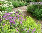 Aranżacja ogrodu: co posadzić w ogrodzie?