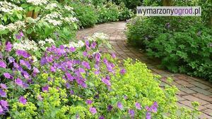 Urządzanie ogrodu: jakie rośliny powinny znaleźć się w ogrodzie