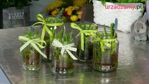 Wiosenna dekoracja z roślinami cebulkowymi