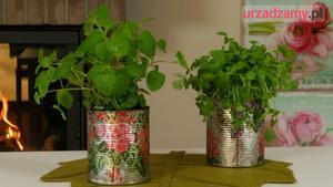 Uprawa ziół w domu: jak zrobić oryginalną doniczkę