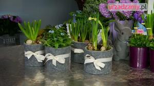 Dekoracja na Wielkanoc z wiosennych kwiatów doniczkowych