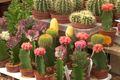 Rośliny doniczkowe dla leniwych i zapracowanych [WIDEO]