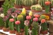 Katusy rośliny dla leniwych: kwiaty w mieszkaniu