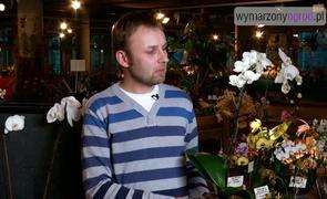Jak kupować storczyki