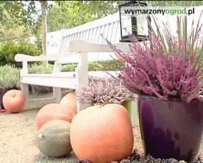Wrzosowisko: ogród pełen wrzosów