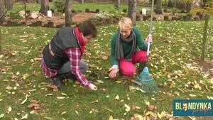 Trawnik jesienią: jak przygotować trawnik do zimy [WIDEO]