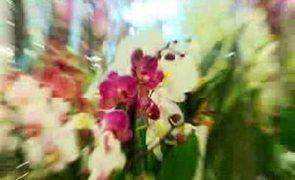 Na wystawie orchidei