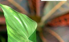 Jak czyścić liście roślin doniczkowych