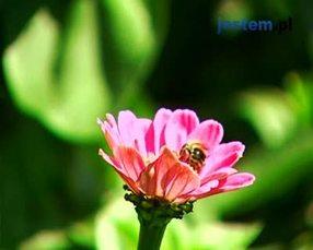 Letnia pielęgnacja roślin w ogrodzie