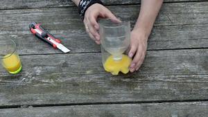 Pułapka z plastikowej butelki na osy, muchy i inne owady