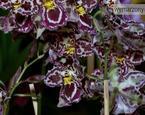 Jak pielęgnować storczyki: kwiaty w mieszkaniu