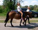 Jeździectwo sposobem na pasję od najmłodszych lat