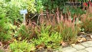 Jak przygotować ogród do zimy? Wrzosy i wrzośce