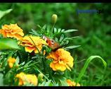 Letni ogród. Pielęgnacja roślin ogrodowych