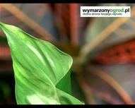 Pielęgnacja roślin. Jak czyścić liście kwiatów doniczk