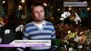 Uprawa storczyków. Jak kupować storczyki?
