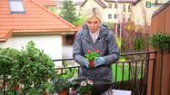 Maja Popielarska radzi: Jak podlewać rośliny na balkonie