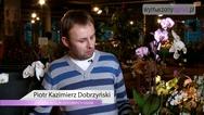 Kwiaty doniczkowe. Jak polewać storczyki?