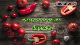 Warzywa na balkon - papryka