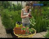 Rośliny na balkon. Pomysły na kompozycje z kwiatów balkonowych