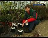 Pielęgnacja ogrodu - przycinanie krzewów ozdobnych