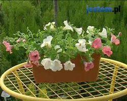 Jak sadzić kwiaty na balkonie
